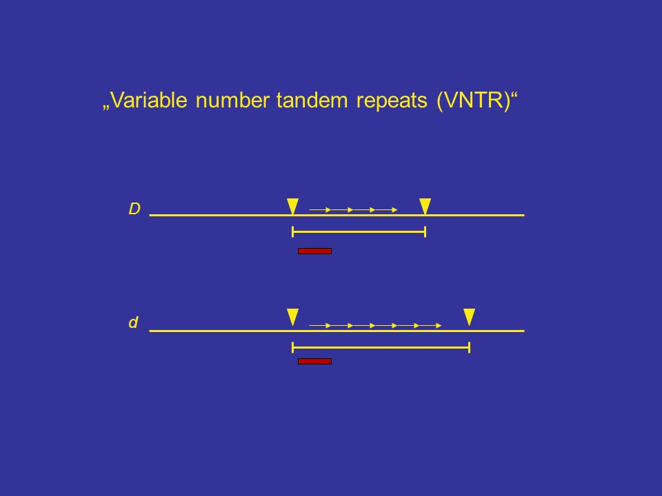 """Variable number tandem repeats (VNTR)"