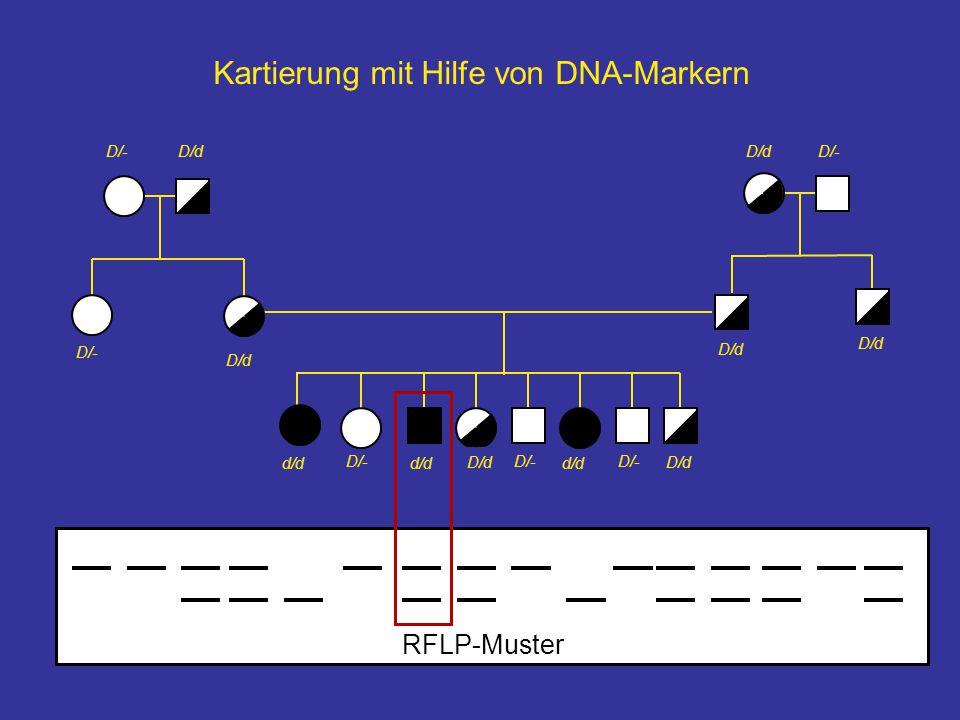 Kartierung mit Hilfe von DNA-Markern