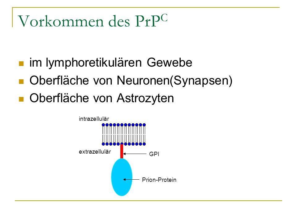 Vorkommen des PrPC im lymphoretikulären Gewebe