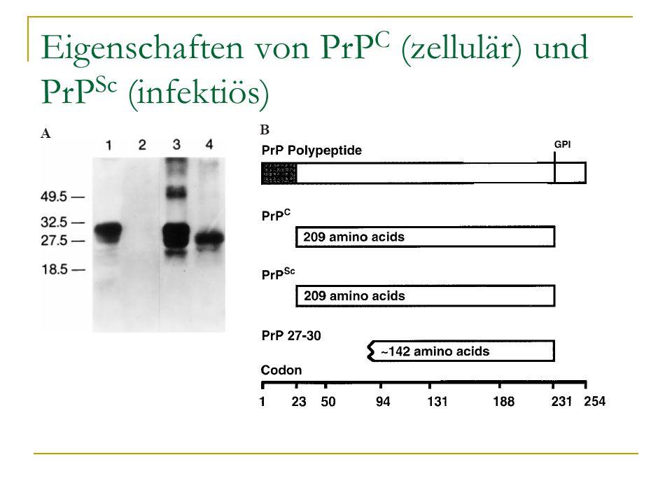 Eigenschaften von PrPC (zellulär) und PrPSc (infektiös)
