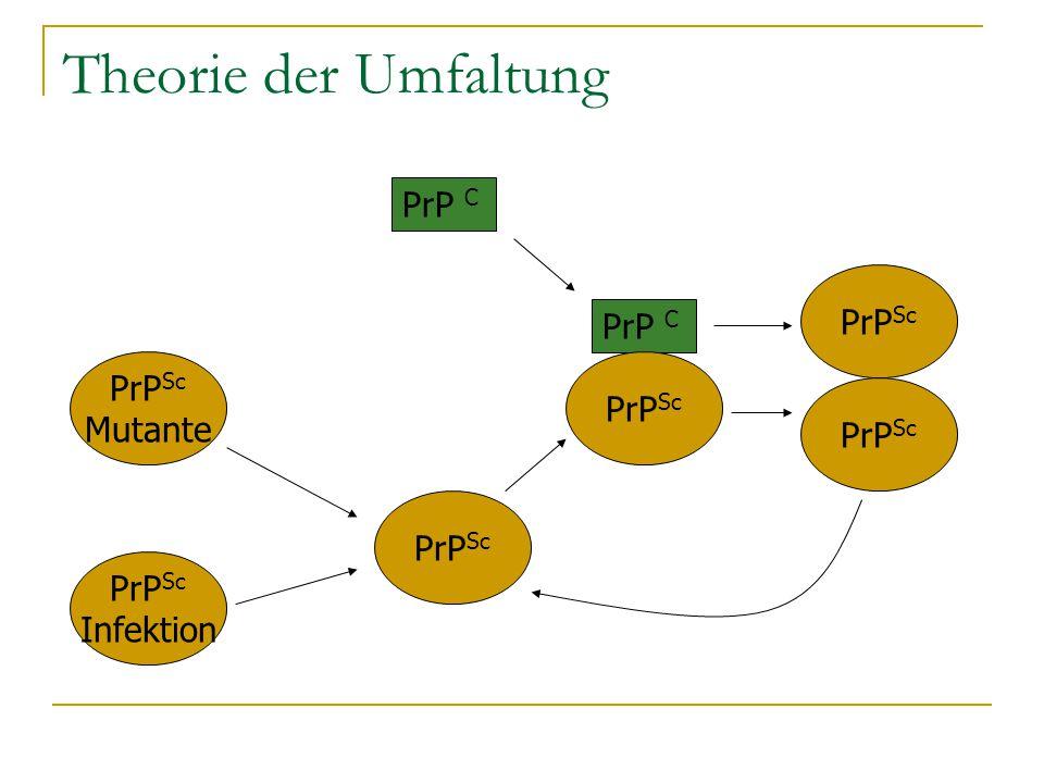 Theorie der Umfaltung PrP C PrPSc PrP C PrPSc PrPSc Mutante PrPSc