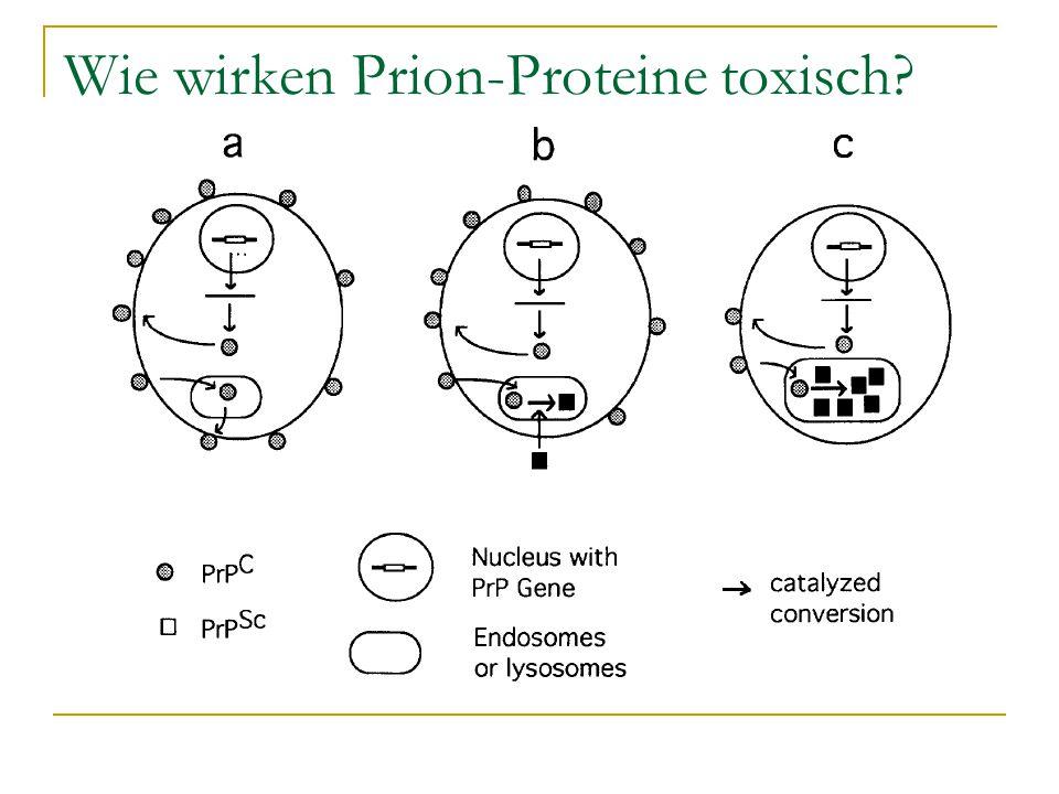 Wie wirken Prion-Proteine toxisch
