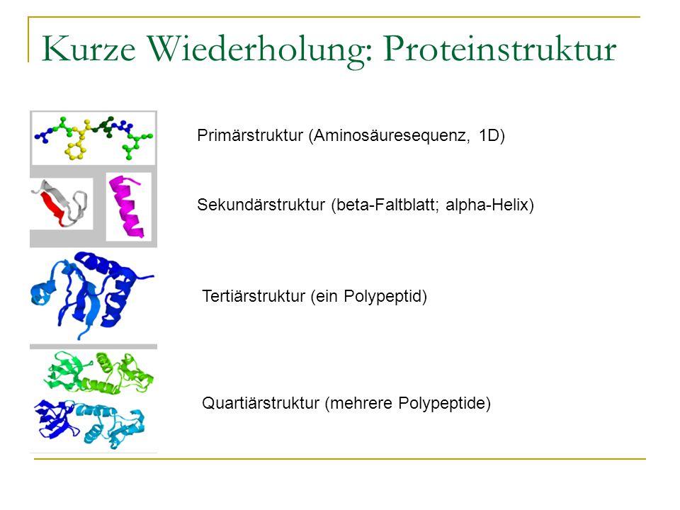 Kurze Wiederholung: Proteinstruktur