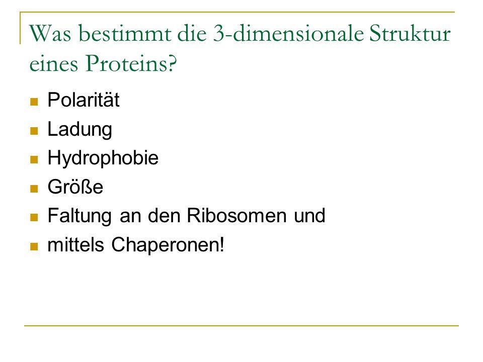 Was bestimmt die 3-dimensionale Struktur eines Proteins