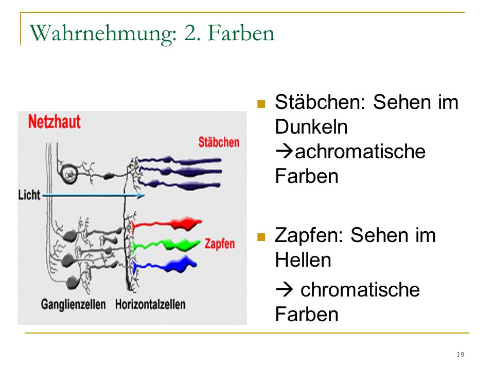 Wahrnehmung: 2. Farben Stäbchen: Sehen im Dunkeln achromatische Farben.