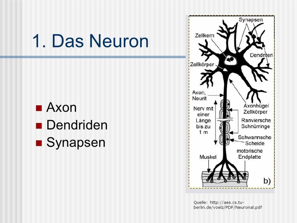 1. Das Neuron Axon Dendriden Synapsen