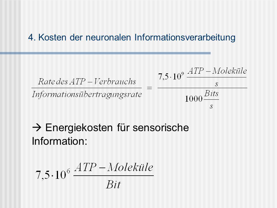  Energiekosten für sensorische Information: