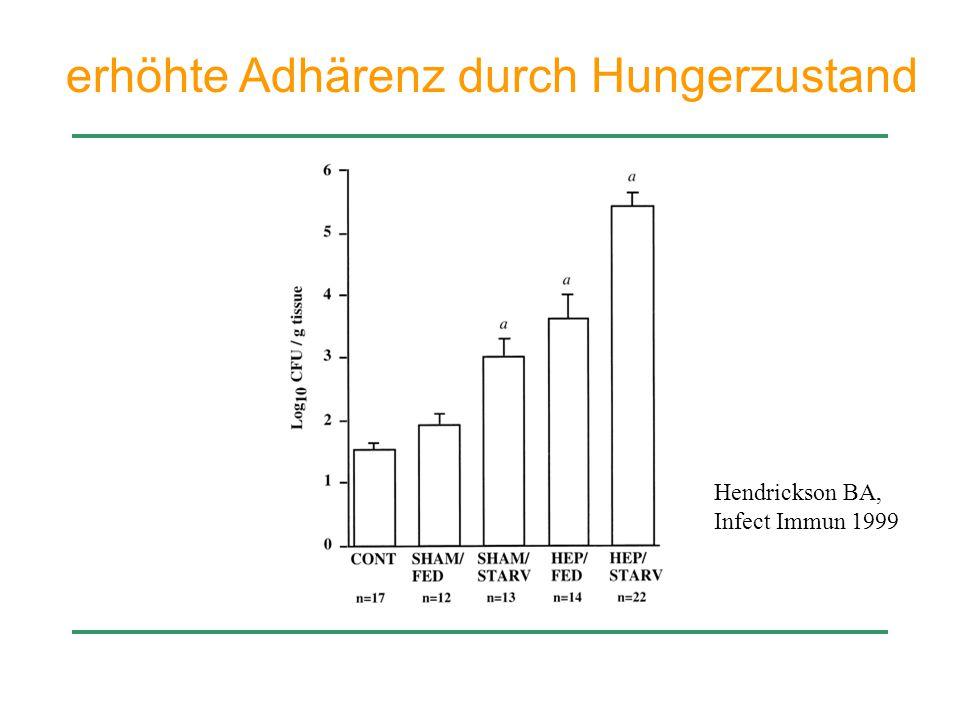 erhöhte Adhärenz durch Hungerzustand