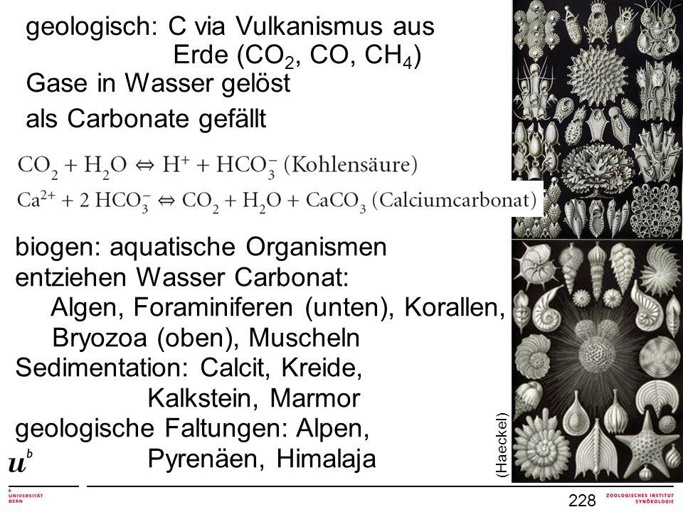 geologisch: C via Vulkanismus aus Erde (CO2, CO, CH4)