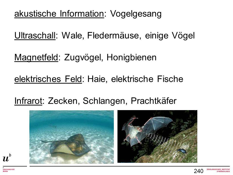 akustische Information: Vogelgesang