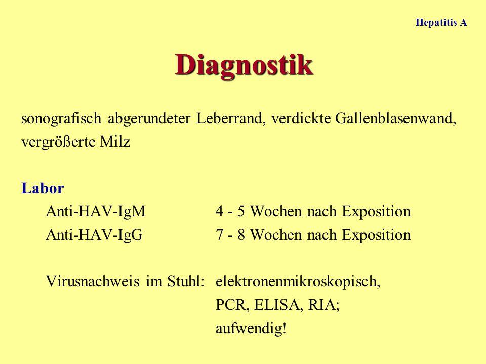 Hepatitis A Diagnostik. sonografisch abgerundeter Leberrand, verdickte Gallenblasenwand, vergrößerte Milz.