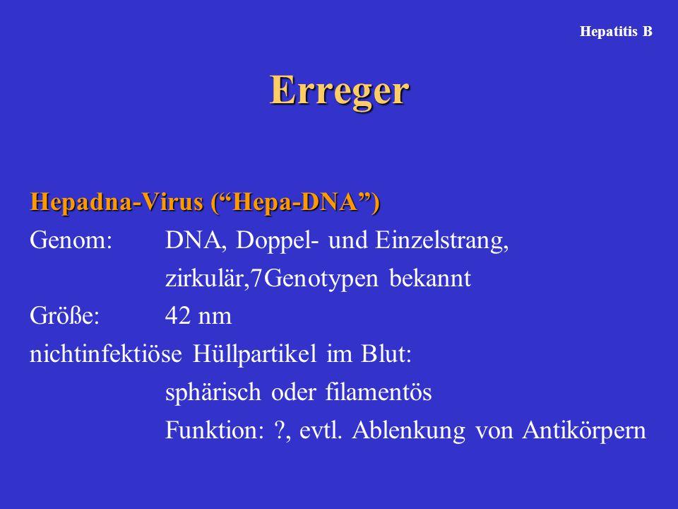 Erreger Hepadna-Virus ( Hepa-DNA )
