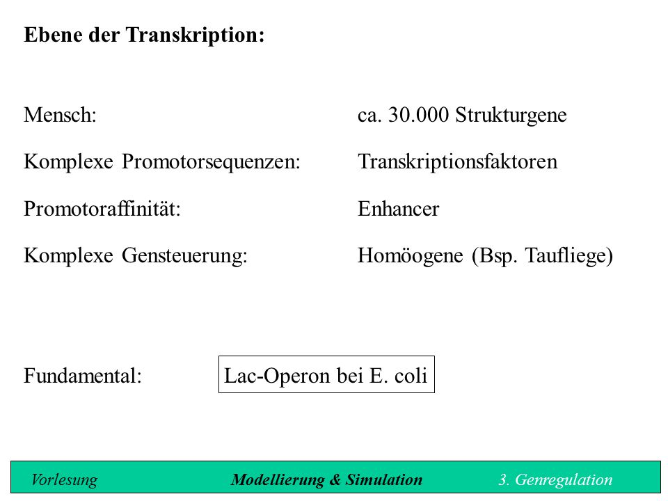 Ebene der Transkription:
