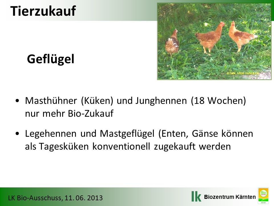 Tierzukauf Geflügel. Masthühner (Küken) und Junghennen (18 Wochen) nur mehr Bio-Zukauf.