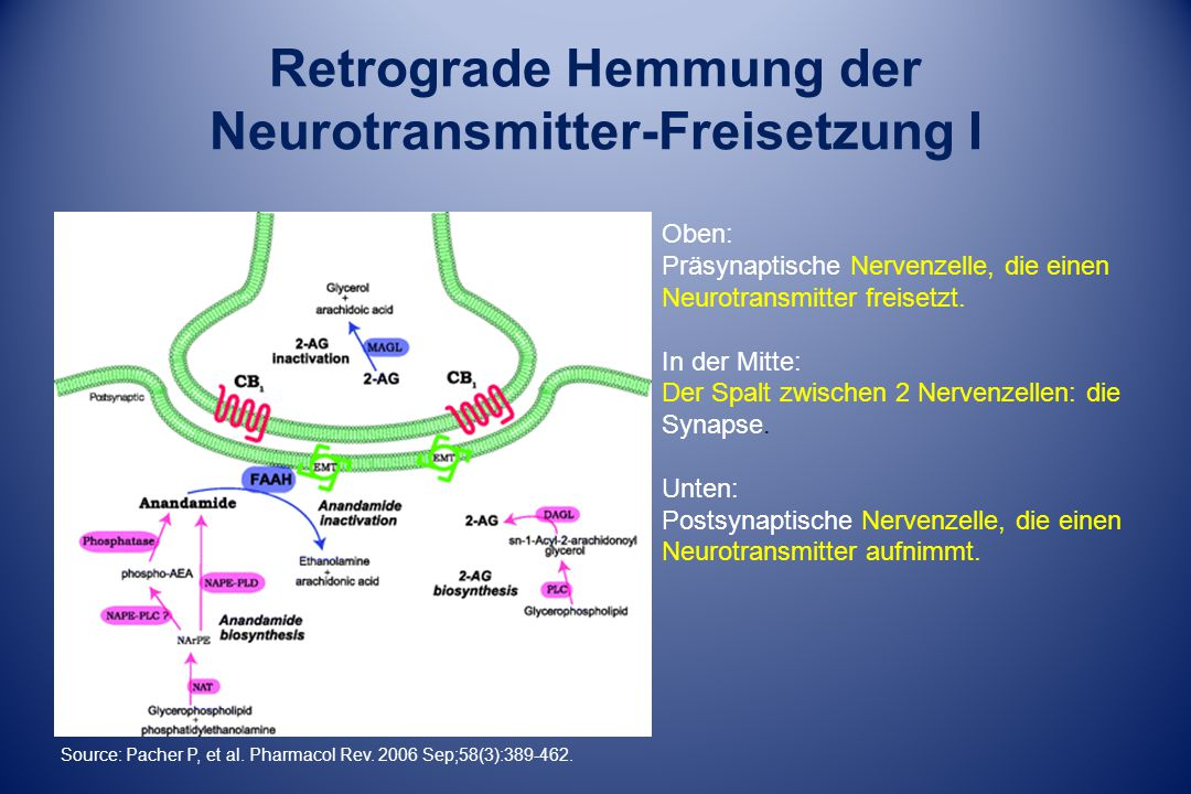 Retrograde Hemmung der Neurotransmitter-Freisetzung I