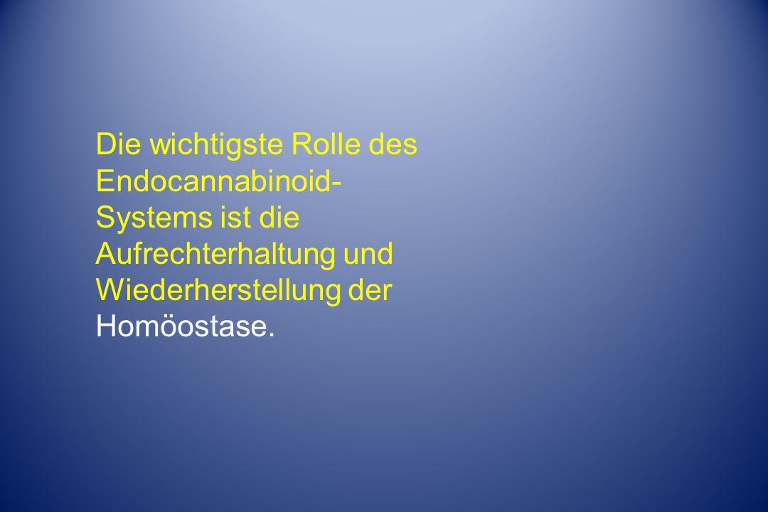 Die wichtigste Rolle des Endocannabinoid-Systems ist die Aufrechterhaltung und Wiederherstellung der Homöostase.
