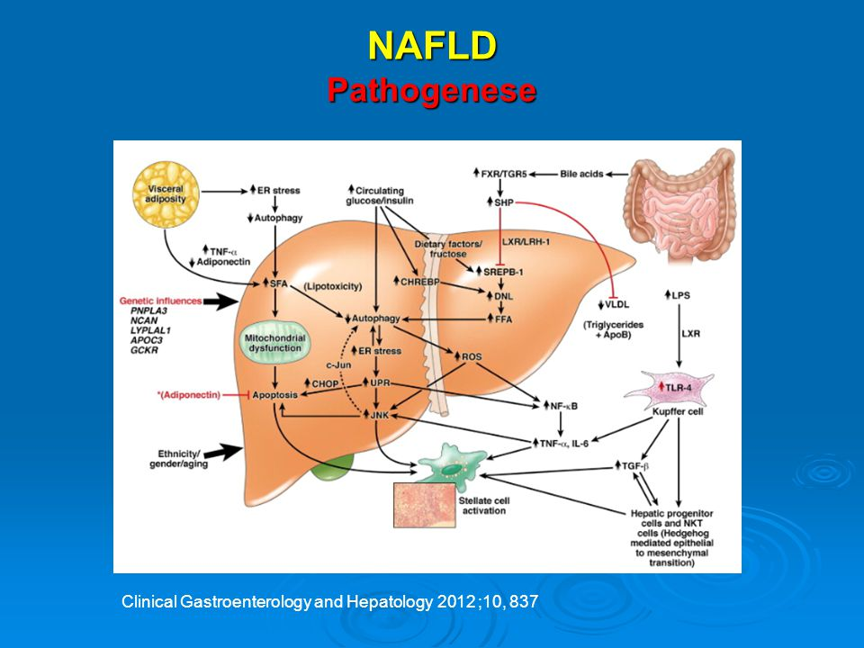 NAFLD Pathogenese . Clinical Gastroenterology and Hepatology 2012 ;10, 837