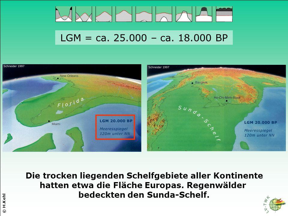 LGM = ca. 25.000 – ca. 18.000 BP Die trocken liegenden Schelfgebiete aller Kontinente. hatten etwa die Fläche Europas. Regenwälder.