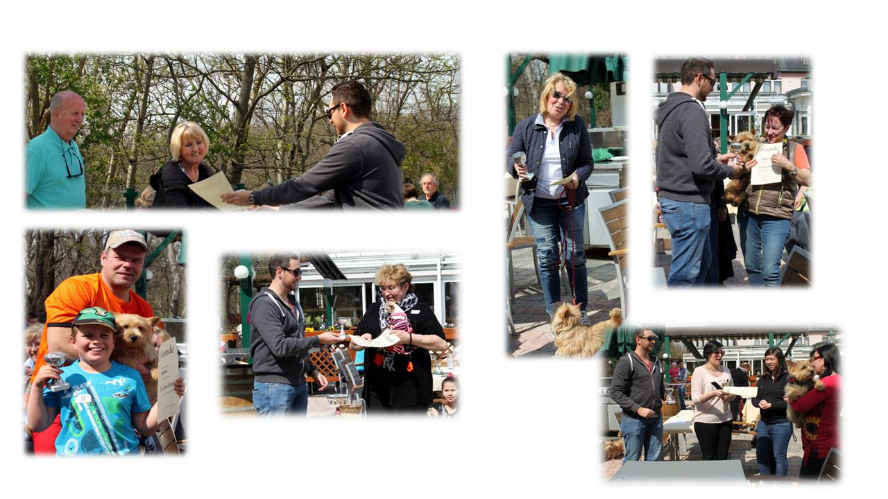 Hundeolympiade (153) Hundeolympiade (162) Hundeolympiade (156) Hundeolympiade (161)