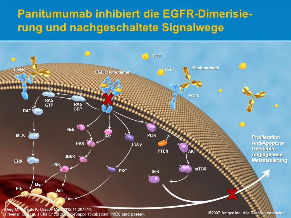 Panitumumab inhibiert die EGFR-Dimerisie-rung und nachgeschaltete Signalwege