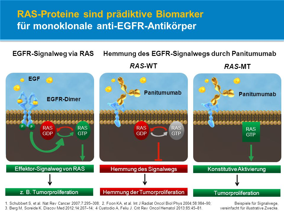 EGFR-Signalweg via RAS Hemmung des EGFR-Signalwegs durch Panitumumab