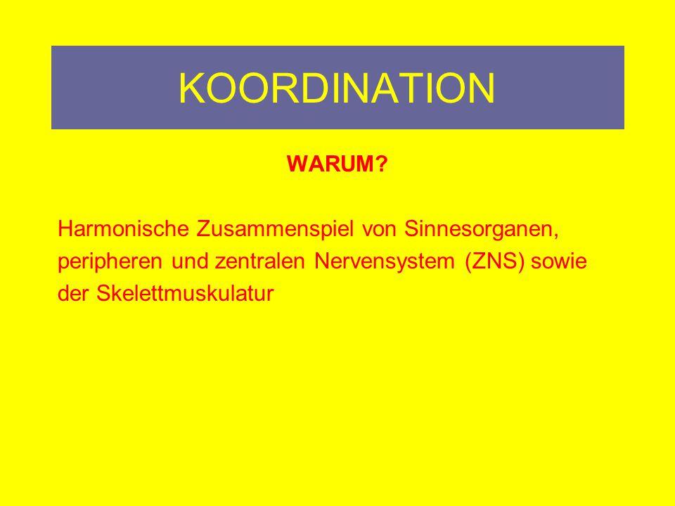 KOORDINATION WARUM Harmonische Zusammenspiel von Sinnesorganen,