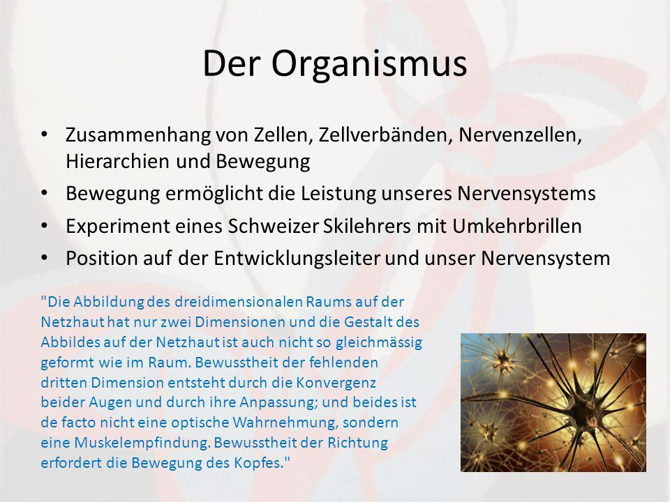 Der Organismus Zusammenhang von Zellen, Zellverbänden, Nervenzellen, Hierarchien und Bewegung.