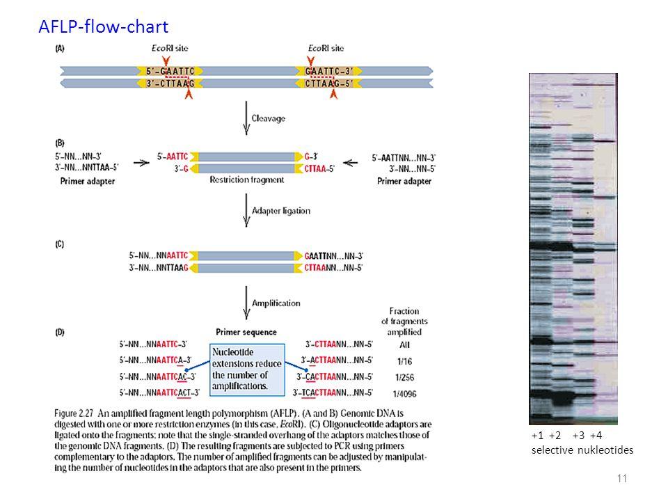 AFLP-flow-chart +1 +2 +3 +4 selective nukleotides