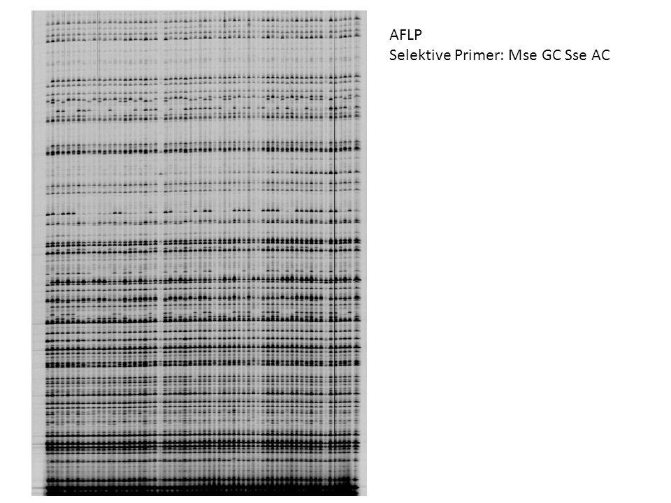 AFLP Selektive Primer: Mse GC Sse AC