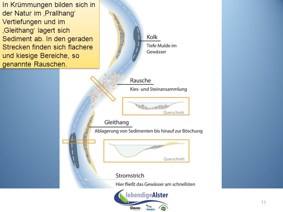 In Krümmungen bilden sich in der Natur im 'Prallhang' Vertiefungen und im 'Gleithang' lagert sich Sediment ab. In den geraden Strecken finden sich flachere und kiesige Bereiche, so genannte Rauschen.
