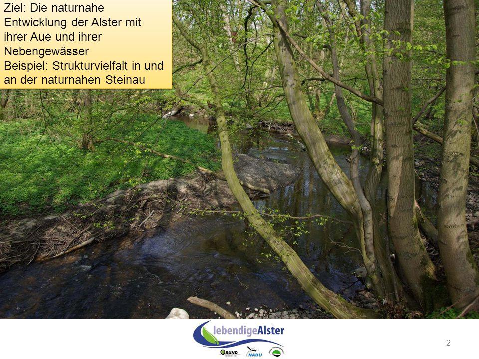 Beispiel: Strukturvielfalt in und an der naturnahen Steinau