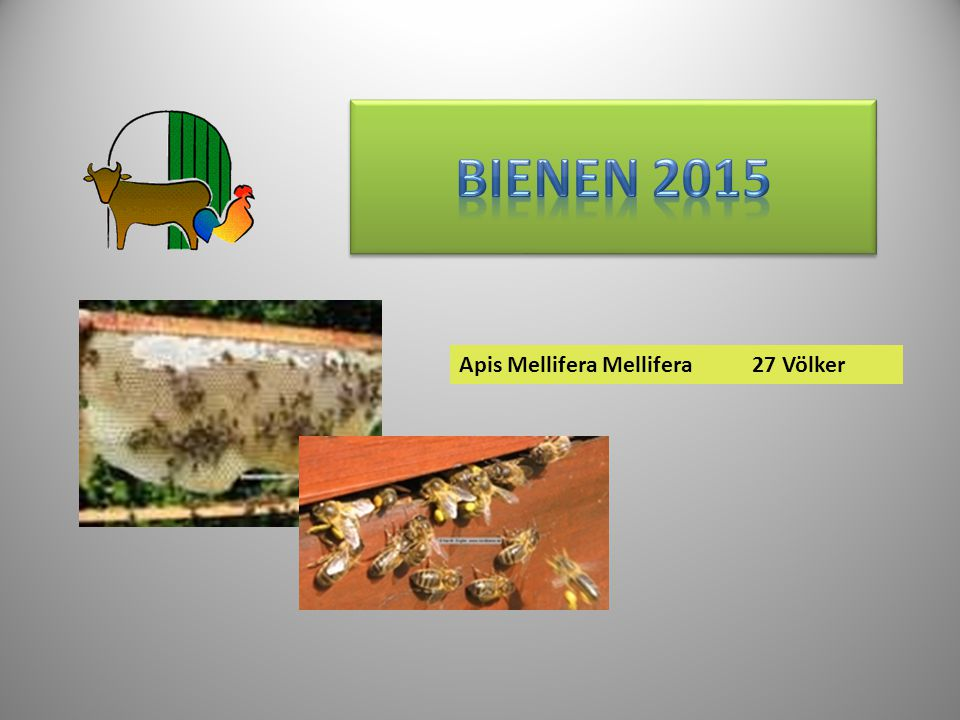 Bienen 2015 Apis Mellifera Mellifera 27 Völker 27