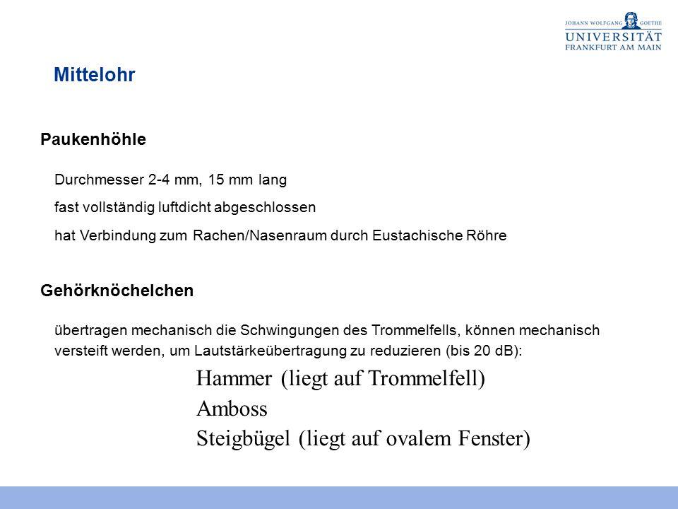 Hammer (liegt auf Trommelfell) Amboss