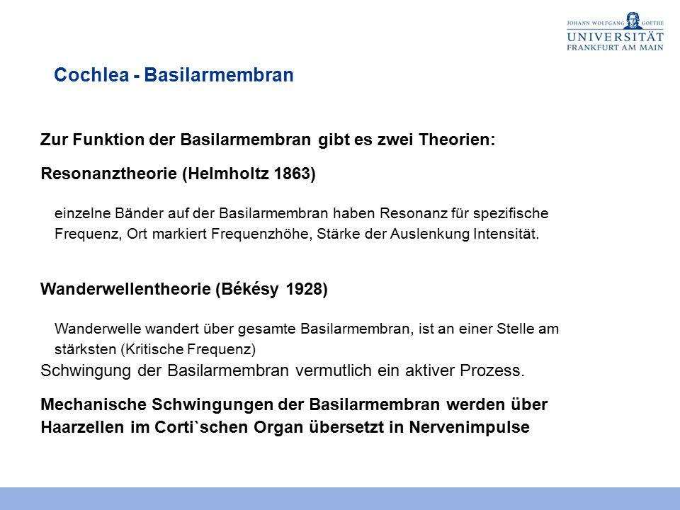Groß Normale Ohranatomie Zeitgenössisch - Anatomie Ideen - finotti.info
