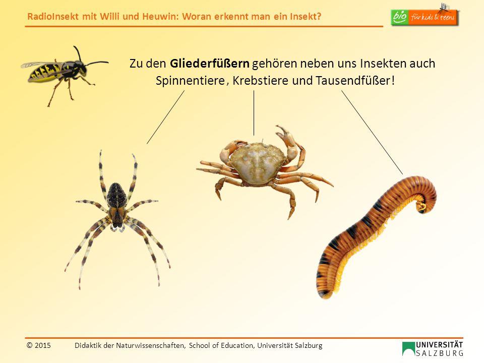 Zu den Gliederfüßern gehören neben uns Insekten auch