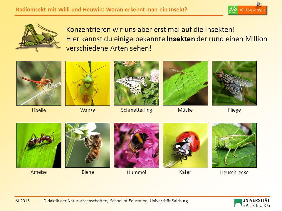 Konzentrieren wir uns aber erst mal auf die Insekten!