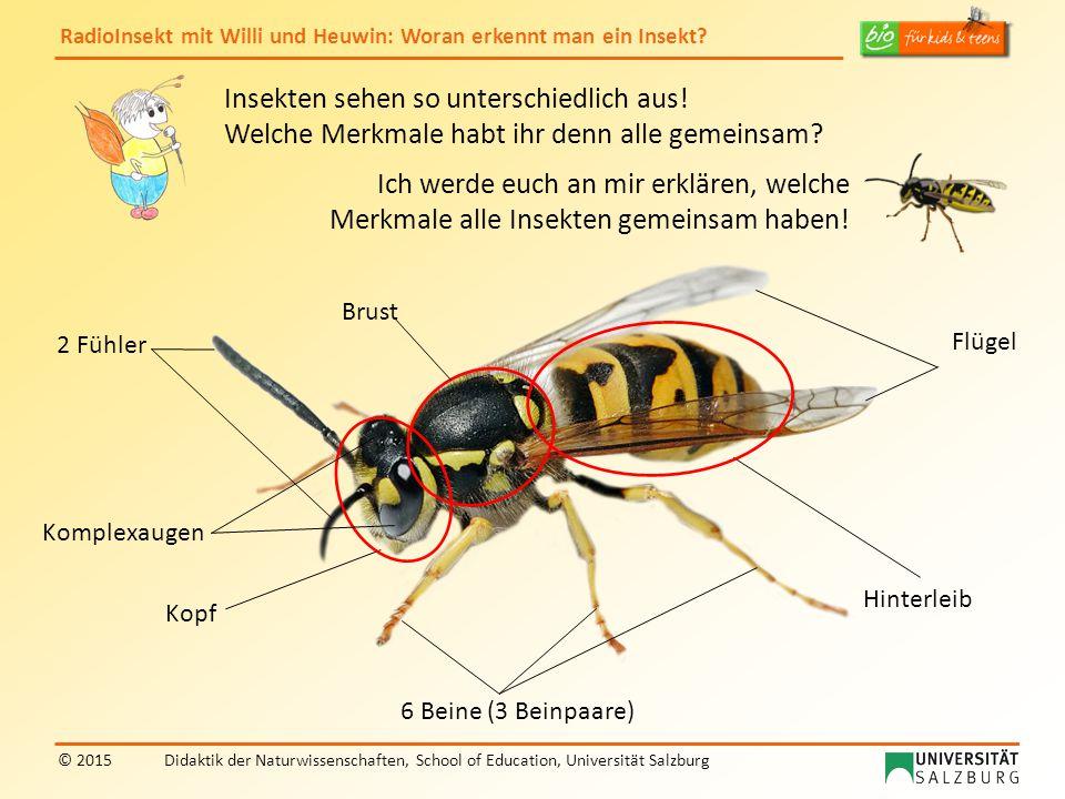 Insekten sehen so unterschiedlich aus!