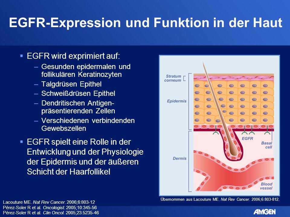 EGFR-Expression und Funktion in der Haut