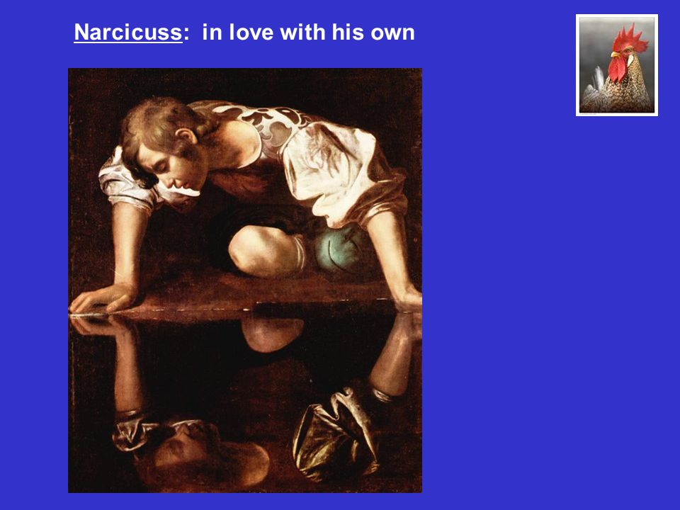 Narcicuss: in love with his own