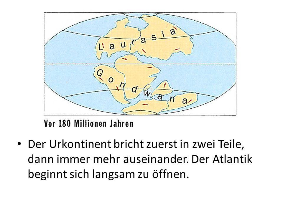 Der Urkontinent bricht zuerst in zwei Teile, dann immer mehr auseinander.