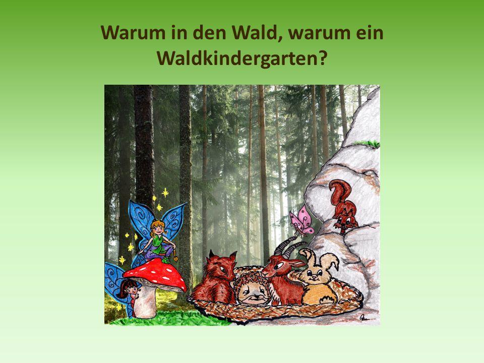 Warum in den Wald, warum ein Waldkindergarten