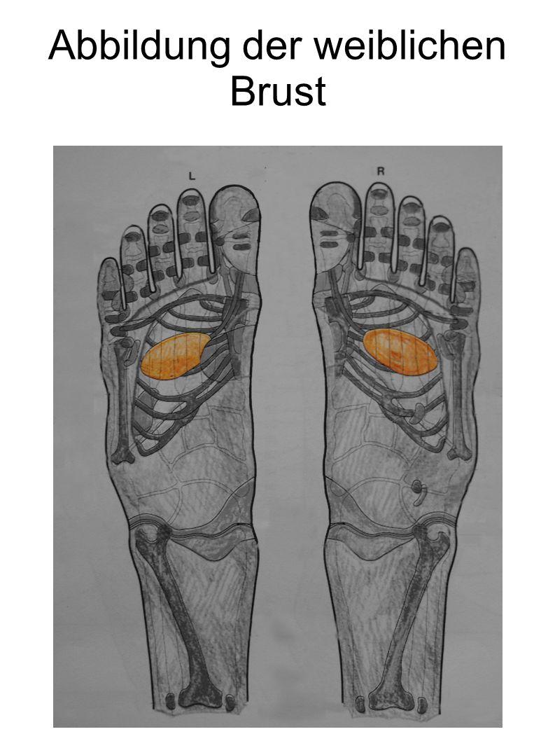 Abbildung der weiblichen Brust