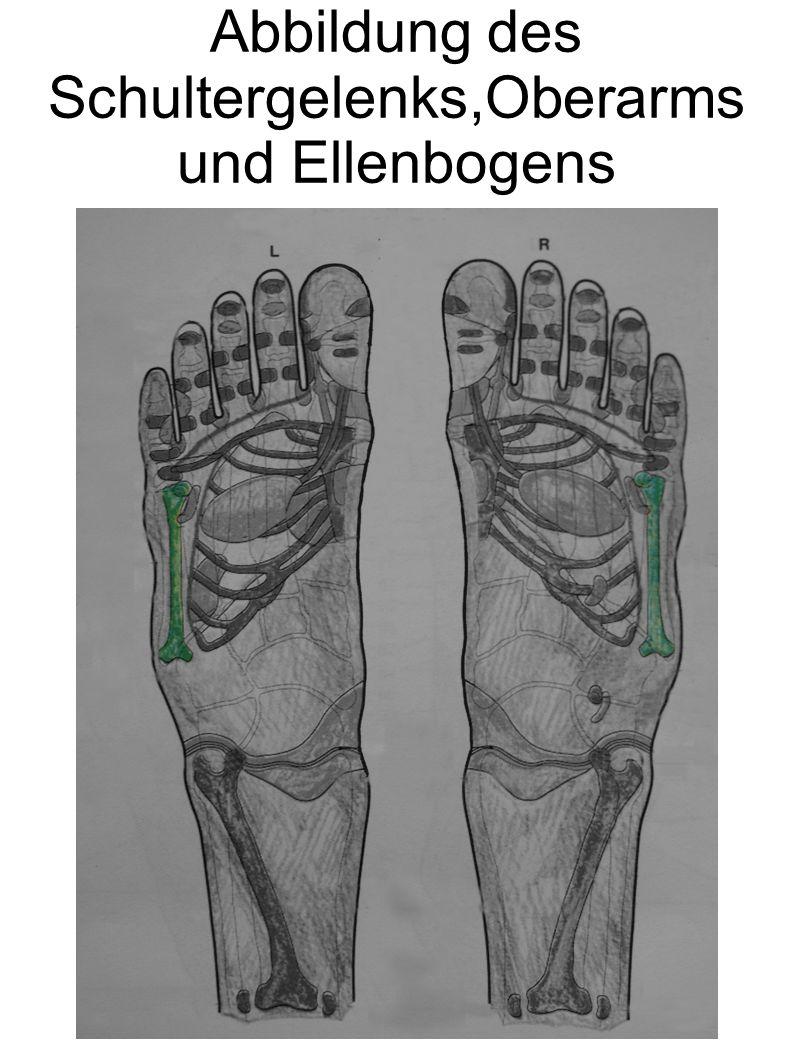 Abbildung des Schultergelenks,Oberarms und Ellenbogens
