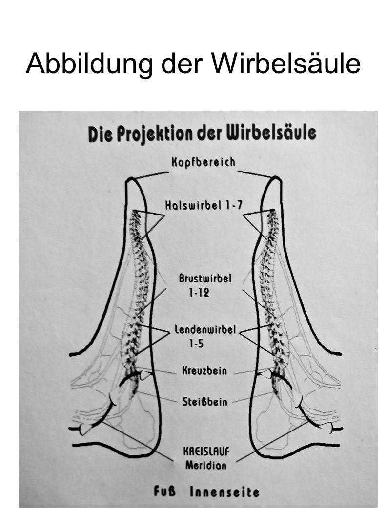 Abbildung der Wirbelsäule