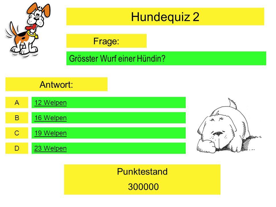 Hundequiz 2 Frage: Grösster Wurf einer Hündin Antwort: 300000