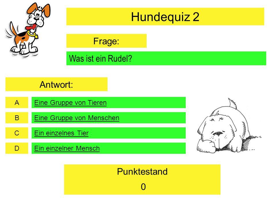 Hundequiz 2 Frage: Was ist ein Rudel Antwort: Eine Gruppe von Tieren
