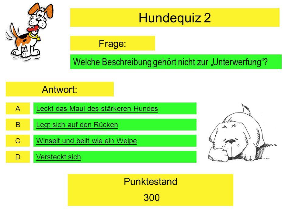"""Hundequiz 2 Frage: Welche Beschreibung gehört nicht zur """"Unterwerfung Antwort: Leckt das Maul des stärkeren Hundes."""