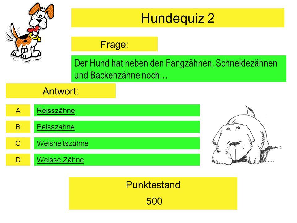 Hundequiz 2 Frage: Der Hund hat neben den Fangzähnen, Schneidezähnen und Backenzähne noch… Antwort: