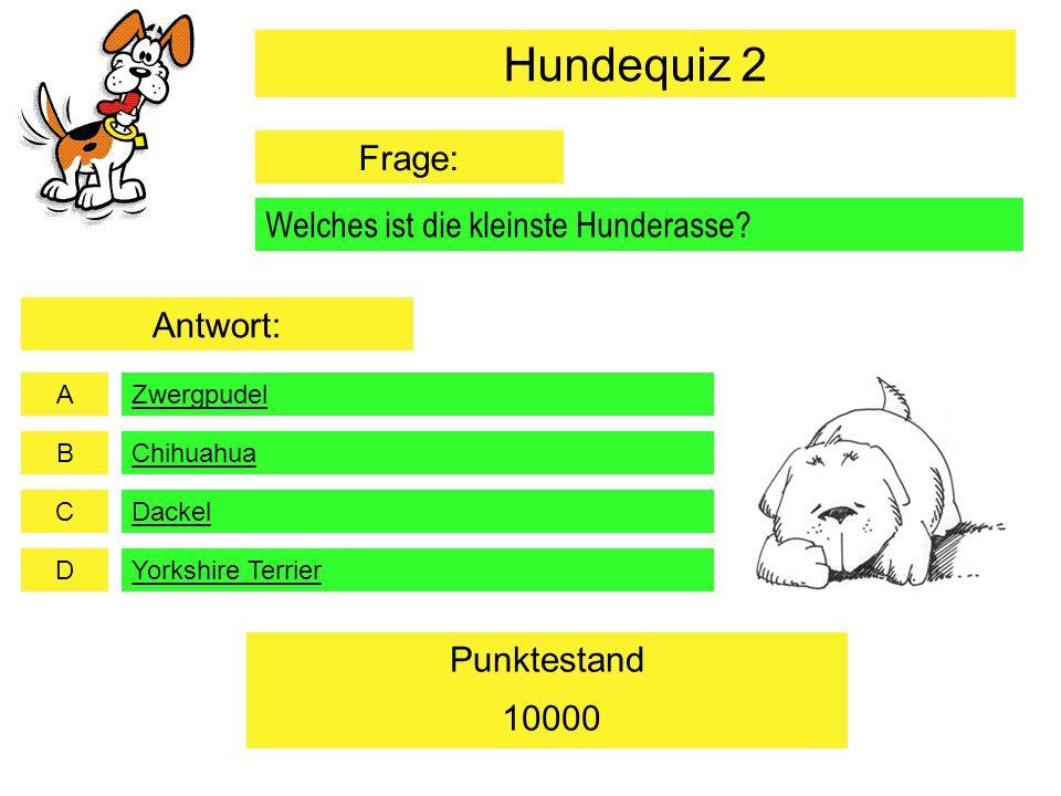 Hundequiz 2 Frage: Welches ist die kleinste Hunderasse Antwort: 10000