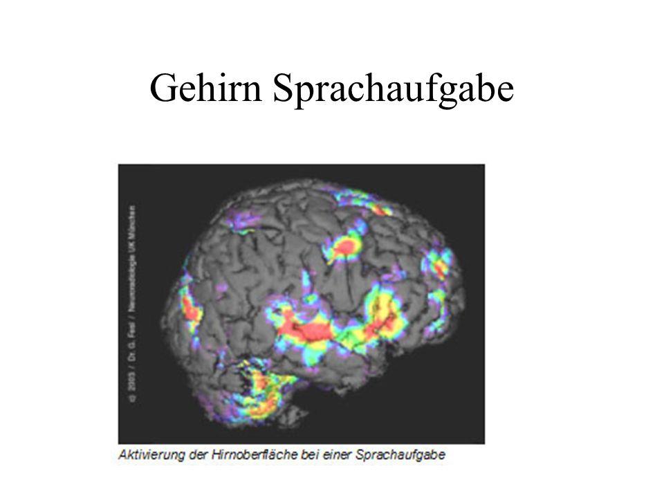 Gehirn Sprachaufgabe